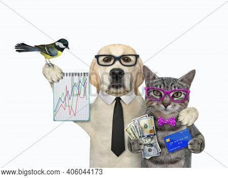 A Gray Cat With A Dog Are Holding Financial Charts, A Credit Card And A Fan Of Dollars. White Backgr
