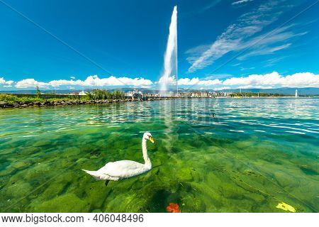 Scenic View Of White Swan Swimming In Turquoise Waters Of Geneva Lake In Geneva Harbor And Of The 14