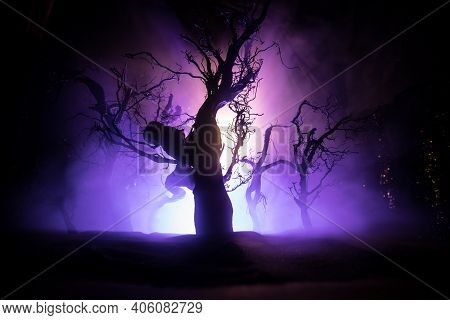 Spooky Dark Landscape Showing Silhouettes Of Trees In The Swamp On Misty Night. Night Mysterious Lan