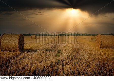 Yellow Golden Straw Bales Of Hay In The Stubble Field, Agricultural Field Under A Blue Sky With Clou