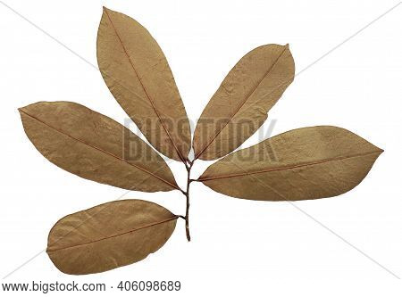 Dry Soursop Leaf Isolated On White Background