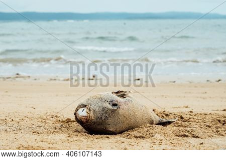 Dead Fish On The Beach. Water Pollution Concept