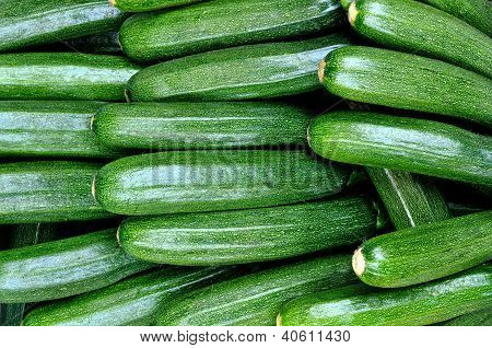 Freshly Picked Zucchini
