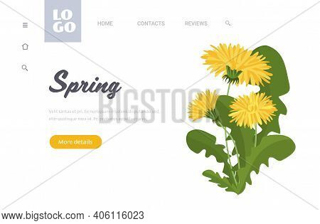Yellow Dandelion Flowers With Green Leaves Spring Season Template Floral Greeting Card Horizontal Co
