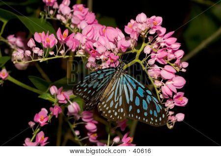 Butterfly On A Bunch Of Flower