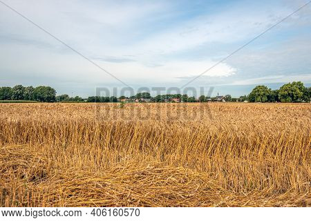 Partly Threshed Field With Ripe Wheat. The Photo Was Taken On A Summer Day Near The Dutch Village Of