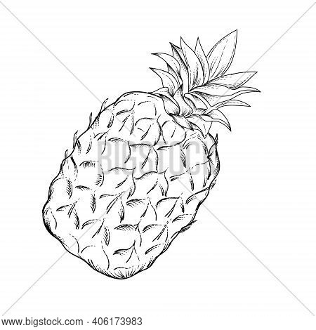 Engraving Hand Drawn Image Of Pineapple Fruit, Vector Illustration Isolated On White Background. Lin