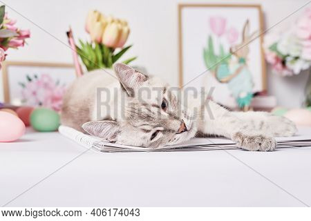 Easter Cat With Eggs And Flowers. Gray Kitten Sitting On Table. Spring Greeting Card Happy Easter. E