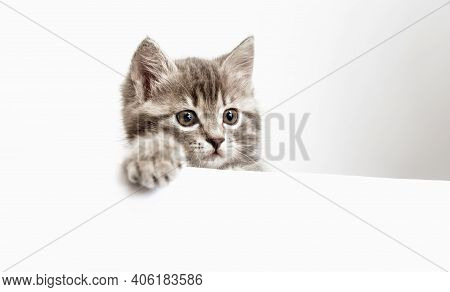 Kitten Surprised Portrait With Paw Peeking Over Blank White Sign Placard Look Side. Tabby Cat On Pla