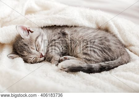 Tabby Kitten Sleep Curled Up On White Soft Blanket. Cat Rest Napping On Bed. Comfortable Pets Sleep