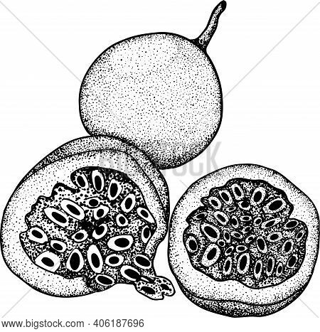 Vector Hand Drawn Set Of Passion Fruits. Delicious Tropical Vegetarian Objects. Use For Menu, Market