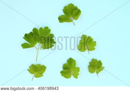 Green Flowers And Plant Leaves On A Blue Background, Template For Your Design, Natural Eco-friendly