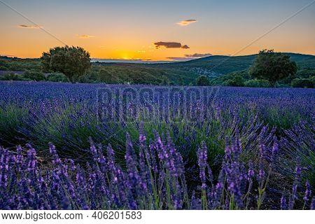 Lavender Fields In Ardeche In Southeast France. Europe