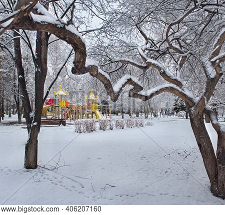 Russia. South Of Western Siberia. A Quaint Elm In The Spring City Park On Tolyatti Street In Novokuz