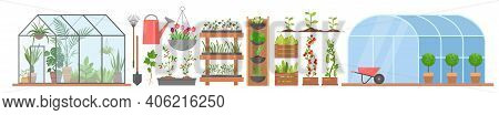 Greenhouse With Growing Flowers Plants Vegetables Set, Glass Or Plastic Tunnel Greenhouse