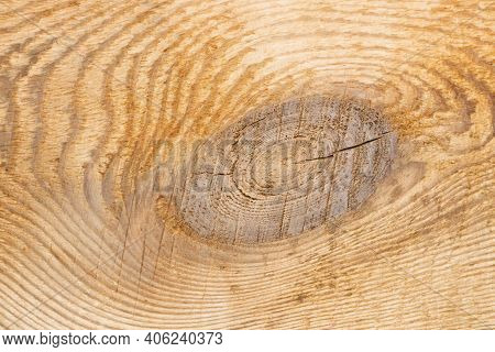 Wood Knot Background. Grunge Wooden Texture. Dry Desk Cracks Pattern. Cut Tree Slice Cross Section.