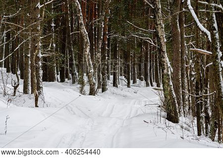 Path In Winter Forest, Beautiful Winter Forest, Winter Landscape