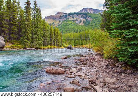 Seething mountain river in the coniferous forest. Province of Alberta. Autumn travel to Canada. Rocky Mountains of Canada. Cloudy day on a mountain