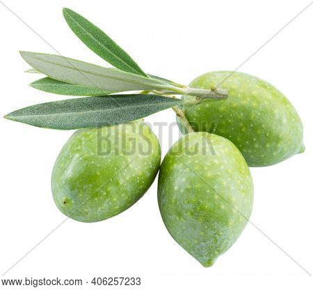 Green natural olives with leaves isolated on a white background. Clipping path.