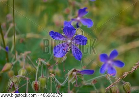 Morning Field Background With Wild Flowers. Wild Flowers In A Meadow Nature.