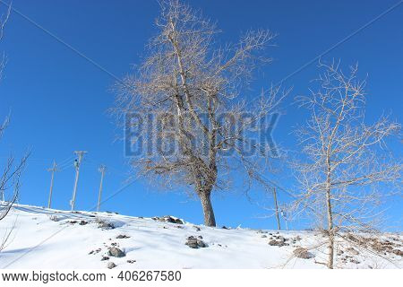 Winter Landscape Showing Trees And Snow On The Ground