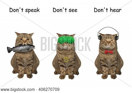 Three Cats Covering Its Eyes, Ears And Mouth Like Three Wise Monkeys. Don't Speak, See And Hear. Whi