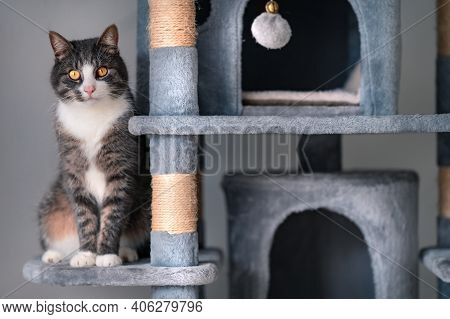 Beautiful Striped Cat Sitting On Grey Cat Tree, Tower Or Condo With Scratching Boards.