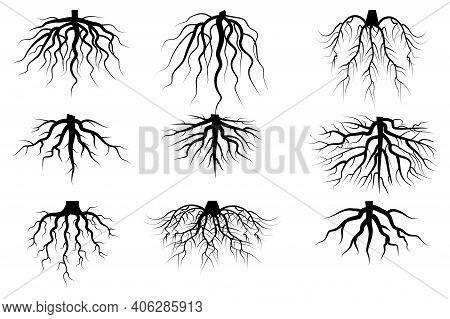 Black Roots Set On White Background. Vintage Floral Background. Vintage Nature Illustration. Stock I