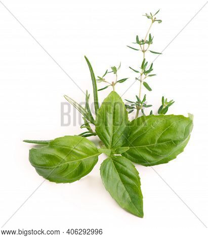 Fresh Garden Herbs Spicy Herbs - Basil And Thyme Isolated On White Background Basil, , Dill