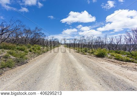 A Long Dry Dirt Road In A Forest Recovering From Bushfire In Kanangra-boyd National Park In The Cent