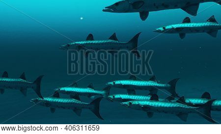 Group Of Barracuda Fishes Swimming In The Deep Blue Ocean Water, Underwater Scene Of Barracuda Fishe