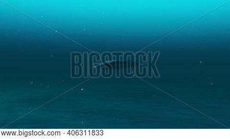 Rorqual Whale Swimming In The Deep Blue Ocean Water, Underwater Scene Of Rorqual Whale, Beauty Of Se