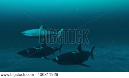 Closeup Of Three Great White Sharks Swimming In The Deep Blue Ocean Water, Underwater Scene Of White