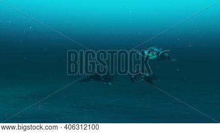 Three Tortoises Swimming In The Deep Blue Ocean Water, Slow Motion Underwater Scene Of Tortoises, Be