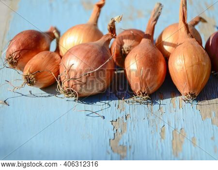 Onions On Blue Old Wooden Background With Copy Space. Concept Spring Planting Of Onions, Sale At The