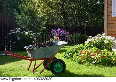 Wheelbarrow Full Of Compost On Green Lawn With Well-groomed Phlox Flowers In Private Farmhouse. Seas