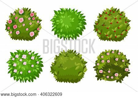 Spring Bush, Shrub Cartoon Green Garden Hedge Collection With Green Leaves, Flower Blossom, Berries.