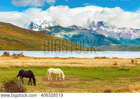 The famous Torres del Paine park in southern Chile. Gorgeous bay and white mustangs graze in dense grass. Lagoon Azul is an amazing mountain lake near three rocks - torres.