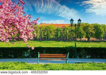 Wonderful Urban Scenery In The Morning. Bench And Lantern Near Blossoming Cherry Tree In The Park. B