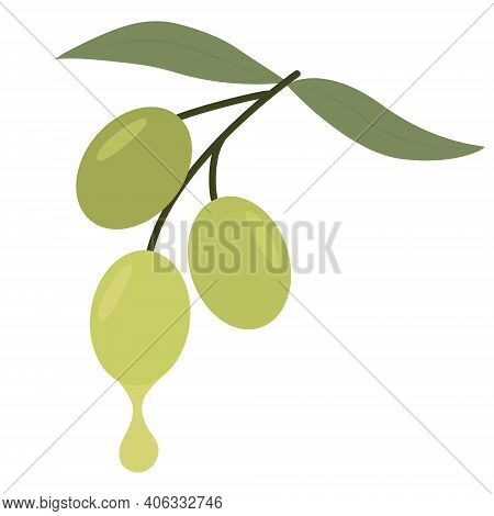 Olive Branch, Vector. Close-up Olives, Berries And Leaves. Editable Object On A White Background.