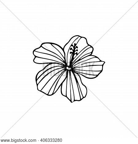 Hibiscus Flower Outline. Hibiscus Line Art Vector Illustration Isolated On White Background. Tropica