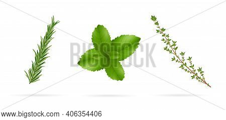 Fresh Spicy Herbs: Rosemary, Thyme, Mint. Vector Illustration Isolated On White Background