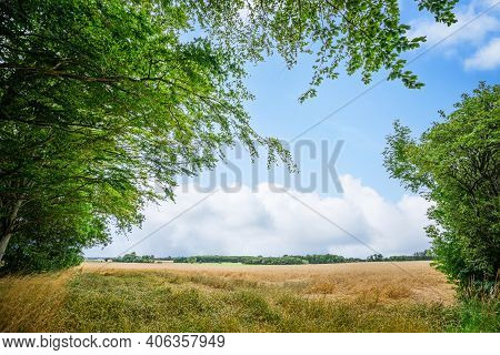 Rural Landscape With Fresh Straw Fields In The Summer Under Green Trees