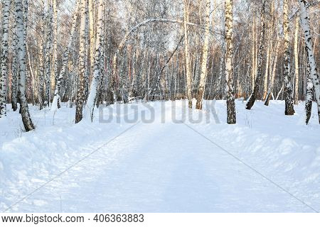 Winter Road In The Forest, Illuminated By The Bright Sun. Birch Grove. Horizontal Photography. Copy