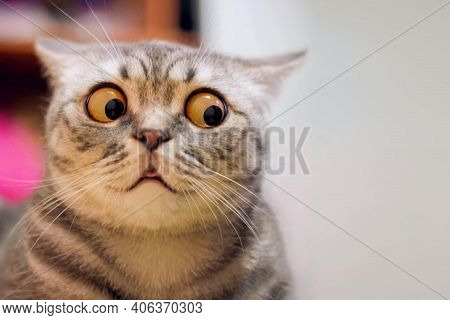 Skeptic Surprised Cat Thinking  Dont Know What To Do, Big Eyes Closeup. Tabby Cat Look Side Dont Kno