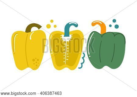Hand Drawn Sweet Bell Pepper, Bulgarian Pepper, Paprika. Vegetable Concept. Flat Illustration.