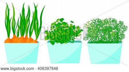 Onions, Dill And Parsley In Pots On The Window