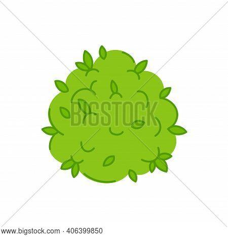 Marijuana Weed Bud. Vector Trendty Flat Line Illustration Icon. Isolated On White Background. Plant