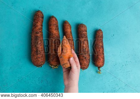 Trendy Ugly Carrot Ecological Choice Vs Food Waste Little Girl Hand