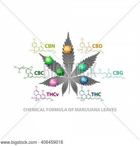 Chemical Formulas Of Natural Cannabinoids. Leaf Of Cannabis With 3d Molecules And Infographic Of Che